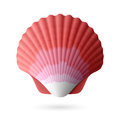 Scallop seashell illustration on white Royalty Free Stock Photos