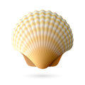 Scallop seashell illustration on white Royalty Free Stock Images