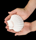 Scallop shell black isolated hand holding Stock Photography
