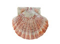 Scallop shell isolated on white background Stock Photography