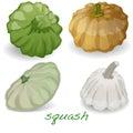 Scalloped custard squash vector