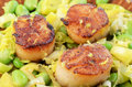 Scallops with leek and edamame Stock Photos