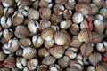 Scallops on the local market Royalty Free Stock Image