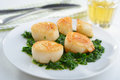 Scallops with spinach roasted on a plate Royalty Free Stock Photo