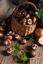 Scaly wood mushroom a fresh and tasty Royalty Free Stock Photo