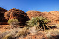 Scant vegetation king Canyon Northern Territory Australia Royalty Free Stock Photo