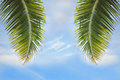 In-scape of coconut palm leaves on cloud-scape background Royalty Free Stock Photo