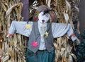 Scarecrow with corn stalks Royalty Free Stock Photo