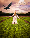 Scarecrow In Field Royalty Free Stock Photo
