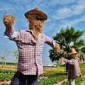 Scarecrow in field farm farmer tree sky Royalty Free Stock Photo