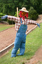 Scarecrow with pumpkin head wearing overalls Royalty Free Stock Photo