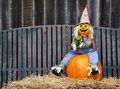 Scarecrow on a pumpkin sitting and hay gray iron bench and wooden fence the background Royalty Free Stock Photography