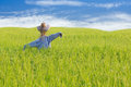 Scarecrow on rice field Royalty Free Stock Photo