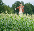 Scarecrow a standing in a field of corn Stock Photo