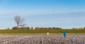 Scarecrows in the sown field to discourage the birds snowy with scarcerows for deterring hungry winter Royalty Free Stock Photography