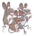 Scared mice pests Royalty Free Stock Photo