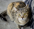 Scared Tabby cat in seek of shelter Royalty Free Stock Photo