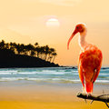 Scarlet ibis bird perched on the branch Royalty Free Stock Photos
