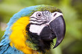 Scarlet macaw bird with beautiful colors Stock Photography