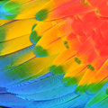 Scarlet Macaw feathers Royalty Free Stock Image