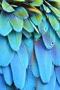 Scarlet Macaw feathers Royalty Free Stock Photo