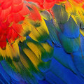 Scarlet macaw feathers colorful background texture Stock Photos