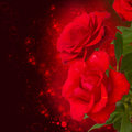 Scarlet roses on dark background bokeh with hearts Stock Images