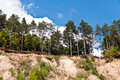 Scarp of sand trees on the in the forest Stock Image