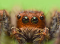 Scarry eyed spidy Royalty Free Stock Photo