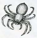 Scary big spider and poisonous drawn with ink Royalty Free Stock Photos