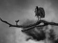 Scary bird Royalty Free Stock Photo