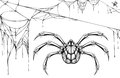Scary black and white spider and torn web. Halloween symbols and accessories