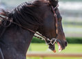 Scary Horse Profile Royalty Free Stock Photo