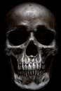 Scary human skull isolated on black background Royalty Free Stock Photo