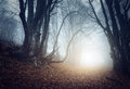 Scary mysterious forest in fog in autumn. Magic trees Royalty Free Stock Photo