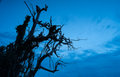 Scary tree the dark shadow of the Royalty Free Stock Photography