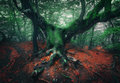 Scary tree. Mystical dark foggy forest Royalty Free Stock Photo