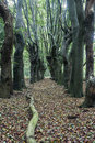 Scary trees in zwolle area overijssel netherlands Stock Photography