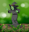 A scary witch above a trunk illustration of Royalty Free Stock Photography