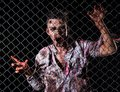 Scary zombie cosplay creepy behind the fence Royalty Free Stock Images
