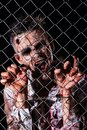 Scary zombie cosplay creepy behind the fence Stock Images