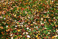 Scattered autumn leaves on green grass Royalty Free Stock Photos