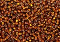 Scattered brown beads Royalty Free Stock Photo