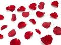 Scattered red Rose petals