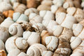 Scattering of river shells with small depth of field side view Royalty Free Stock Photography
