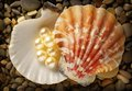 Scattering white pearls in seashell on pebbles Royalty Free Stock Images
