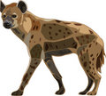 Scavenger on the African grasslands - spot hyena Stock Photos
