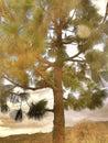 Scenary beautiful sky arizona tree Royalty Free Stock Photography