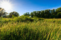 Scene of beautiful sunset at summer field with trees Royalty Free Stock Photo