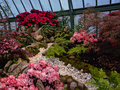 Scene with red and pink flowers in the Royal greenhouses of Laeken Royalty Free Stock Photo